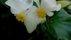 庭白さぼてん555