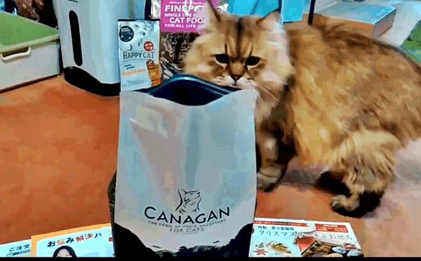 カナガンキャット 猫